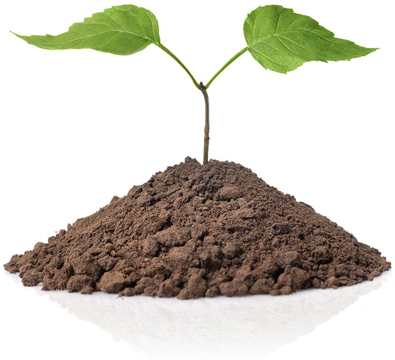 Small tree growing from fertilized and healthy soil.