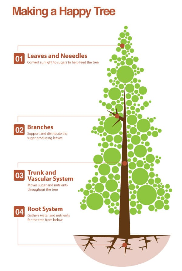 An info graph that shows what makes a happy tree.