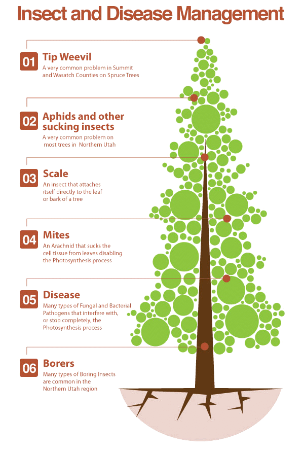 An infograph highlighting disease and insect management.