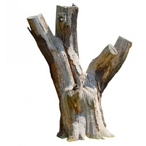 A dying tree stump, which can pose hazards and attract insects.