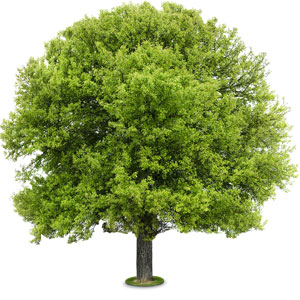 Large, happy tree flourishing on a white background.
